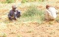 Fafa : Plus de 200 ménages regagnent l'espoir grâce à un projet à impact rapide MINUSMA