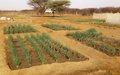 Gao : Une agriculture vivante, commerciale et pérenne est indispensable au développement de la région